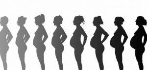 semana 14 de embarazo